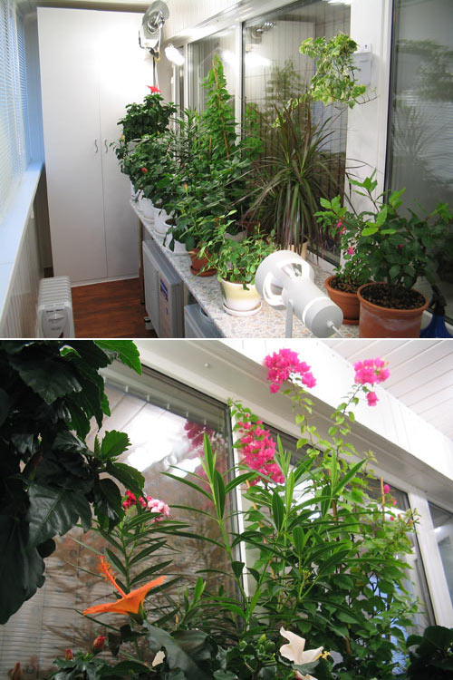 Зимний сад на балконе.. обсуждение на liveinternet - российс.